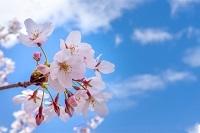春を感じる一枚