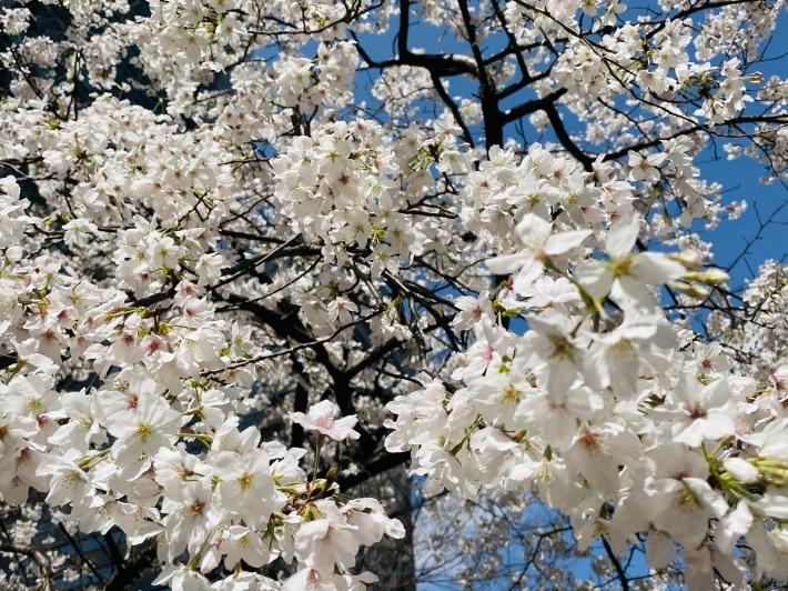 春は焦らず NO.730_c0102513_20563864.jpeg