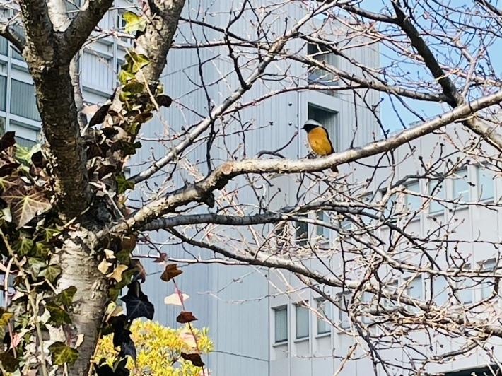 小鳥の来る街 NO.731_c0102513_20573358.jpeg