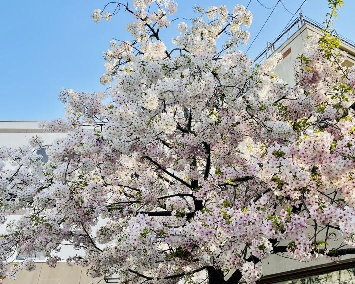春は焦らず NO.730_c0102513_21173565.jpeg