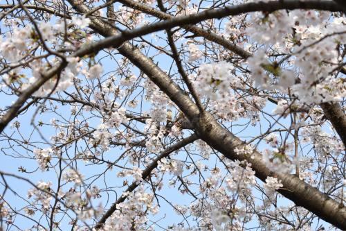 大阪市福島区のやきとり六源です!_d0199623_09552813.jpg