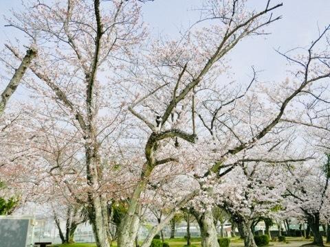みーちゃんとお花見したよ🌸_b0156734_13513096.jpeg
