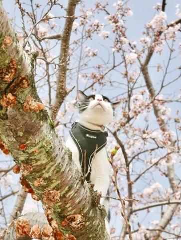 みーちゃんとお花見したよ🌸_b0156734_13545285.jpeg