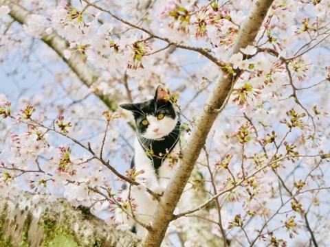 みーちゃんとお花見したよ🌸_b0156734_13554800.jpeg