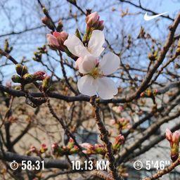 朝ランの風景_a0059035_00073542.jpeg