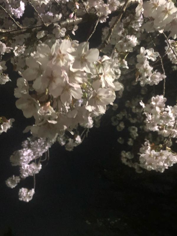 春うらら_c0048536_17053344.jpg