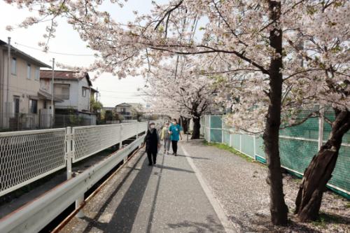 機能訓練 ~ 桜の下で屋外歩行訓練 ~_e0222340_15243918.jpg