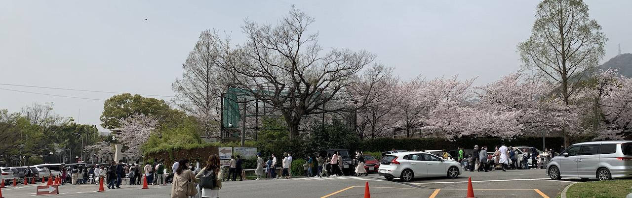 桜(灘 神戸)_b0279441_18190186.jpeg