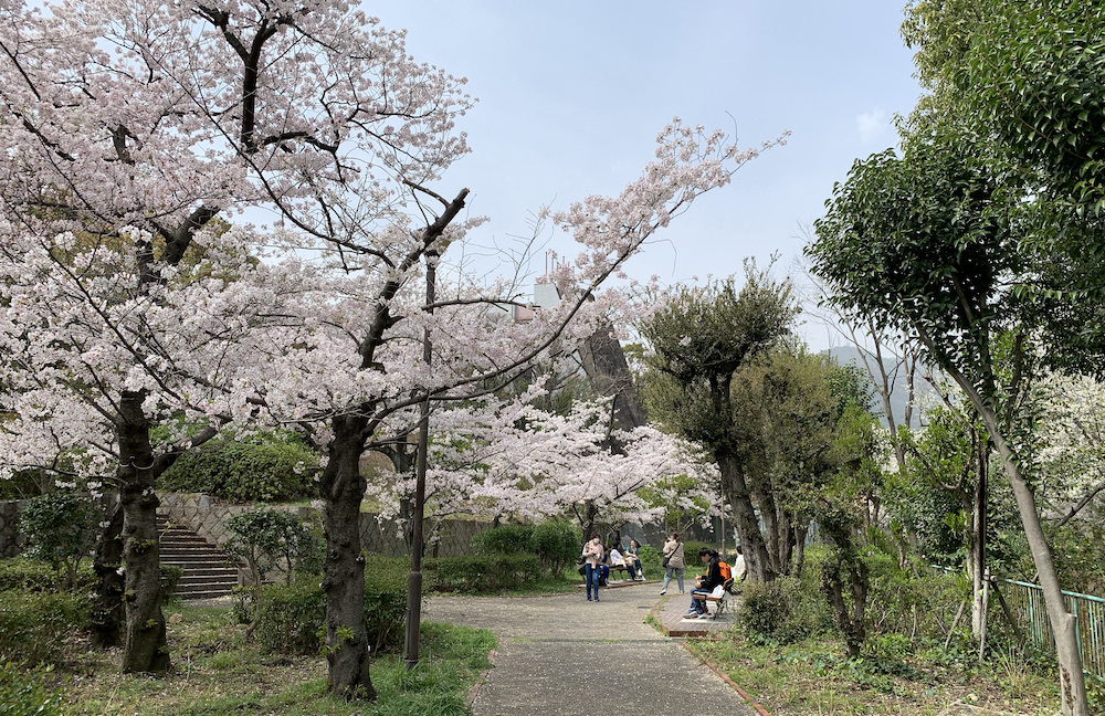 桜(灘 神戸)_b0279441_18190332.jpeg