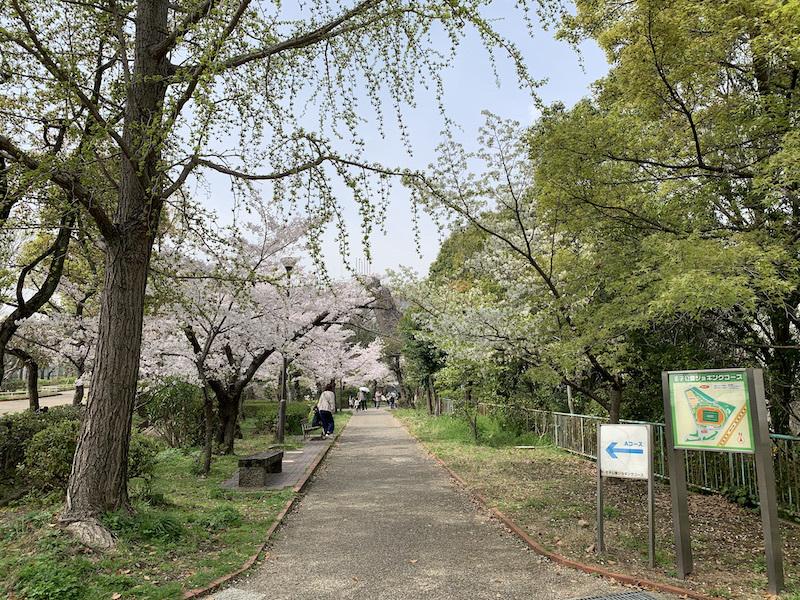 桜(灘 神戸)_b0279441_18190383.jpeg