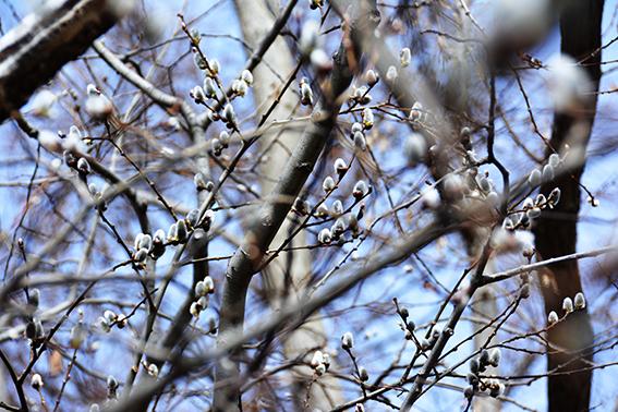 樹々のざわめき 2_f0143469_15212513.jpg