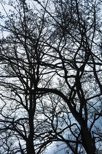 樹々のざわめき 2_f0143469_15212650.jpg