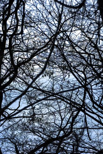 樹々のざわめき 2_f0143469_15212687.jpg