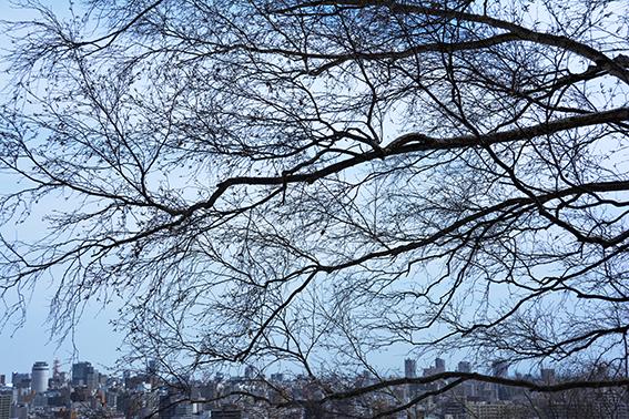 樹々のざわめき 2_f0143469_15212769.jpg