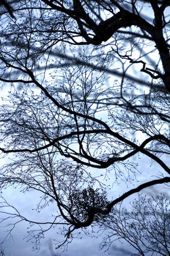 樹々のざわめき 2_f0143469_15212793.jpg