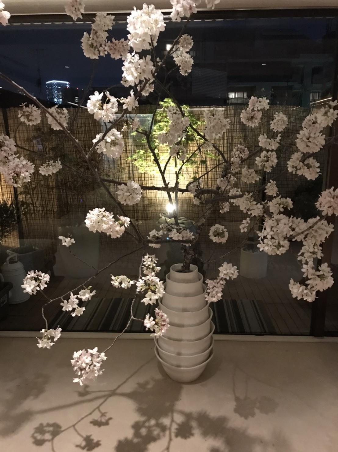 桜は満開♪_d0339889_19194346.jpg