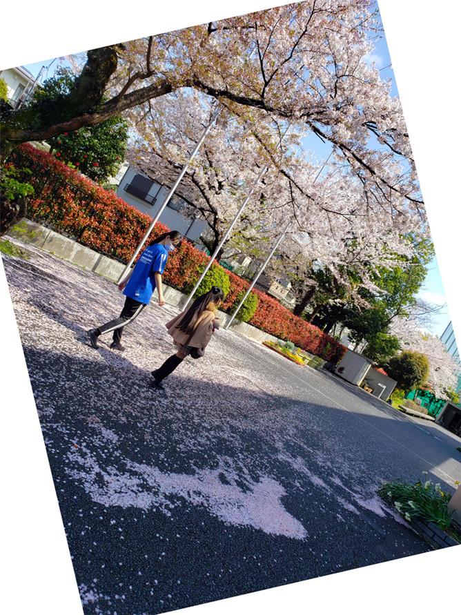 卒業生ちゃん、現役ちゃん、お姉ちゃん達の桜…_d0224894_10452714.jpg