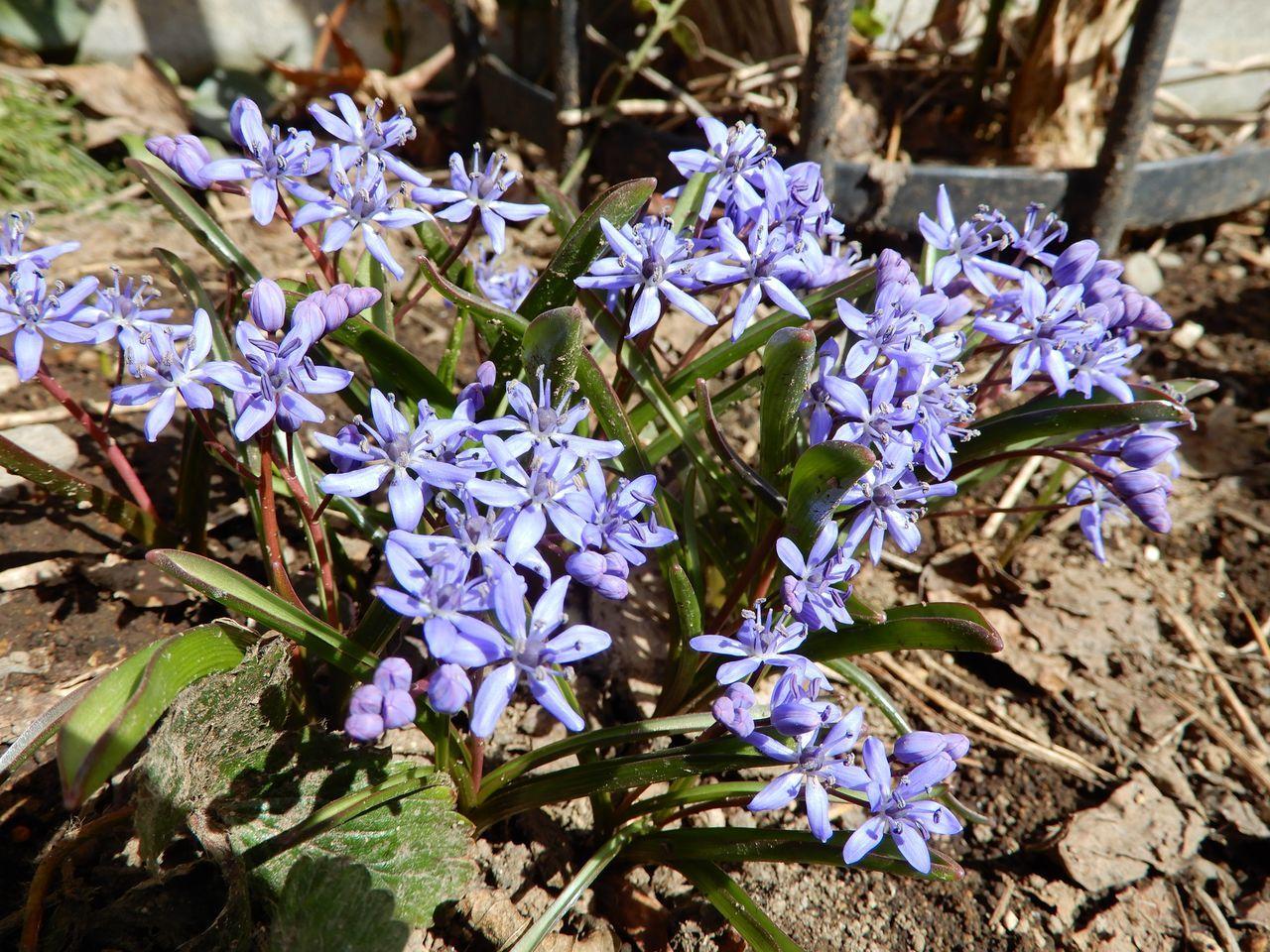 穏やかな春の一日_c0025115_20540627.jpg