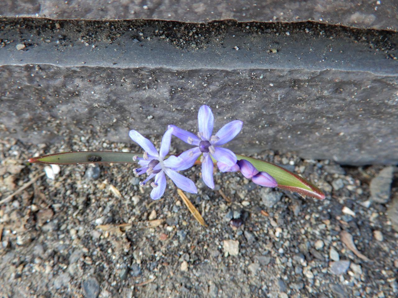 穏やかな春の一日_c0025115_20555492.jpg