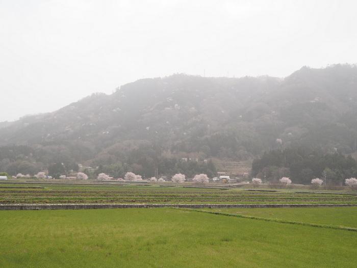 神ノ倉山登山(満開の桜)_c0116915_00312328.jpg
