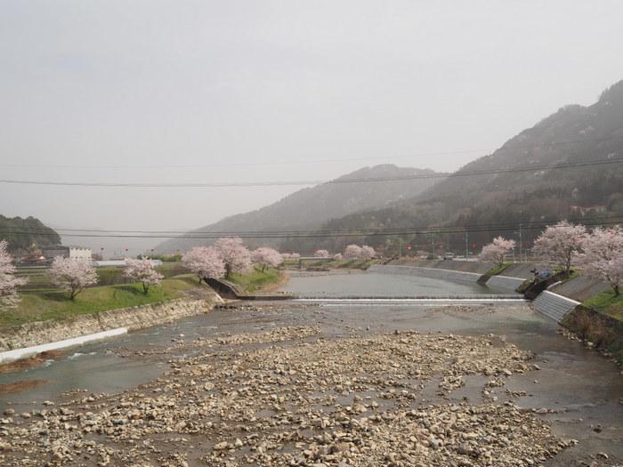 神ノ倉山登山(満開の桜)_c0116915_00335908.jpg