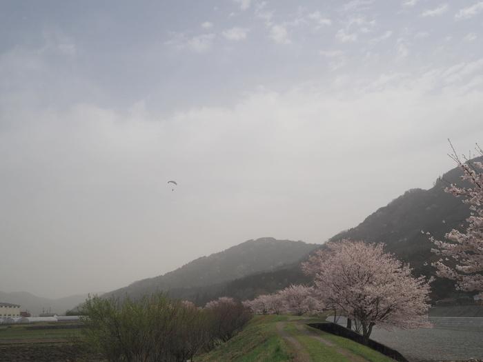 神ノ倉山登山(満開の桜)_c0116915_00362727.jpg