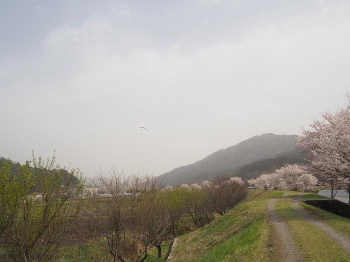 神ノ倉山登山(満開の桜)_c0116915_00365992.jpg