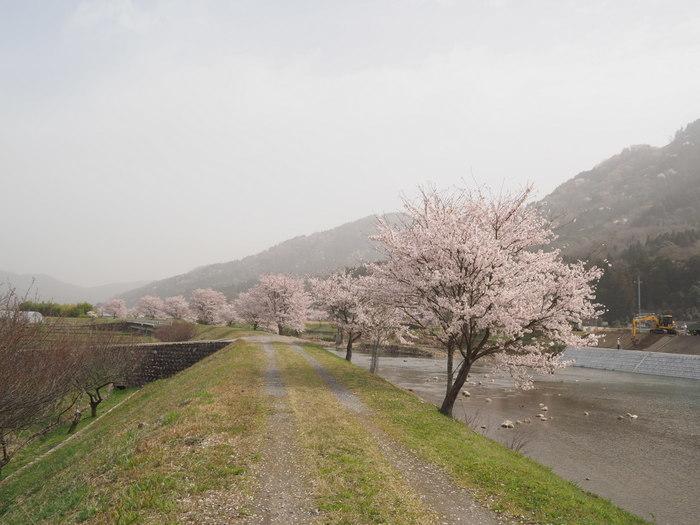 神ノ倉山登山(満開の桜)_c0116915_00373379.jpg