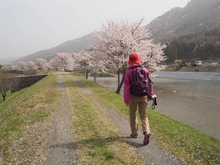 神ノ倉山登山(満開の桜)_c0116915_00374232.jpg