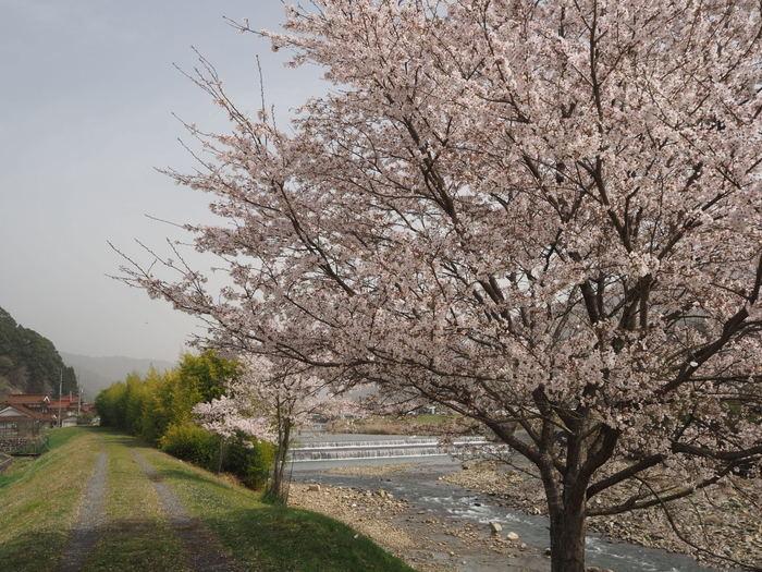 神ノ倉山登山(満開の桜)_c0116915_00382763.jpg