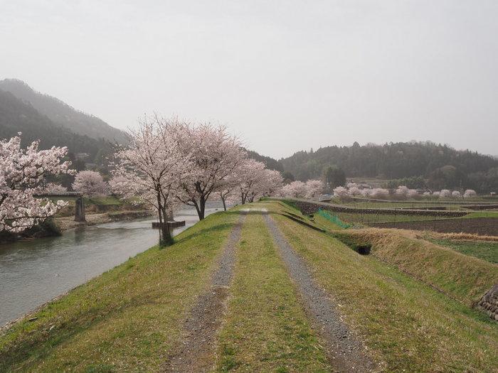 神ノ倉山登山(満開の桜)_c0116915_00383822.jpg