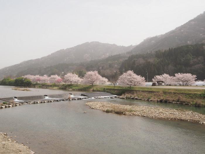 神ノ倉山登山(満開の桜)_c0116915_00385227.jpg