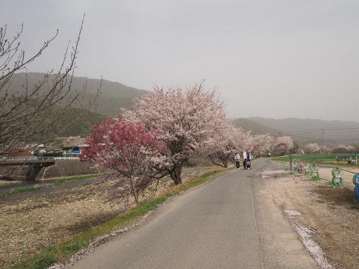 神ノ倉山登山(満開の桜)_c0116915_00420709.jpg