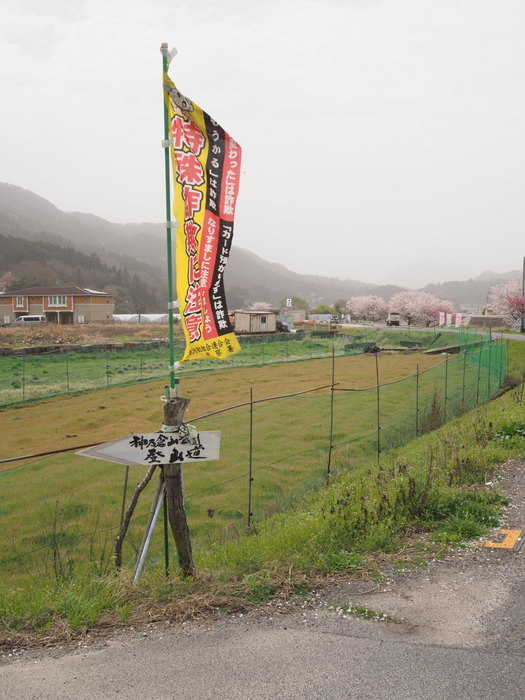 神ノ倉山登山(満開の桜)_c0116915_00431155.jpg