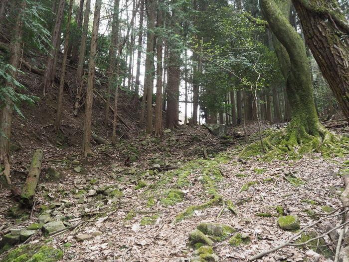 神ノ倉山登山(満開の桜)_c0116915_00435326.jpg