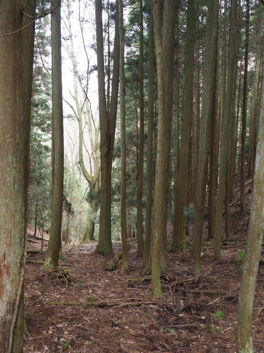 神ノ倉山登山(満開の桜)_c0116915_00440972.jpg