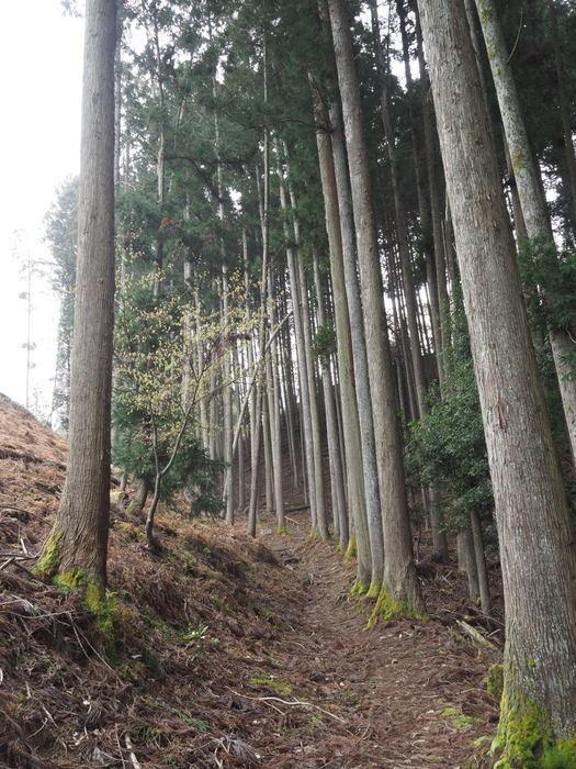 神ノ倉山登山(満開の桜)_c0116915_00442016.jpg