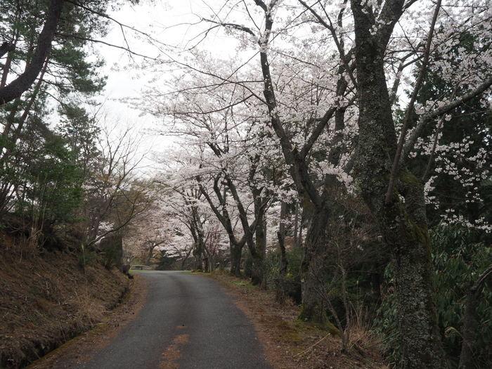 神ノ倉山登山(満開の桜)_c0116915_00463043.jpg