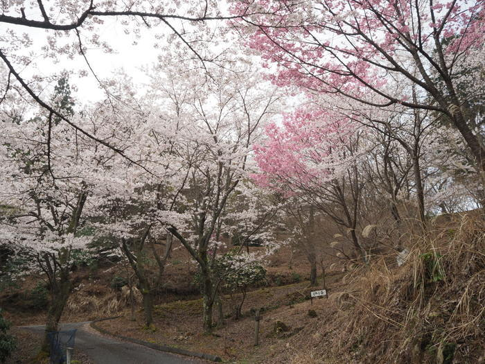 神ノ倉山登山(満開の桜)_c0116915_00464836.jpg