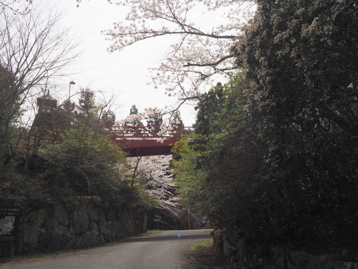 神ノ倉山登山(満開の桜)_c0116915_00475987.jpg