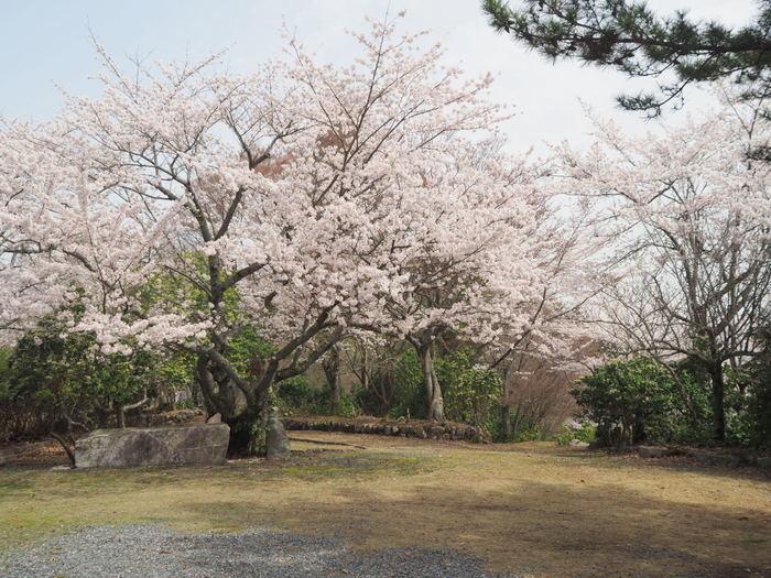 神ノ倉山登山(満開の桜)_c0116915_00495556.jpg
