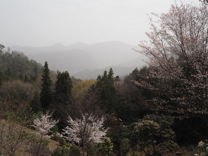 神ノ倉山登山(満開の桜)_c0116915_00501157.jpg