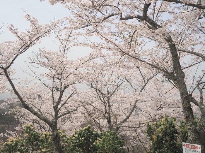 神ノ倉山登山(満開の桜)_c0116915_00511724.jpg