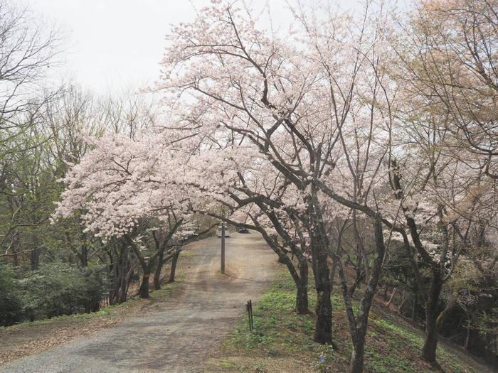 神ノ倉山登山(満開の桜)_c0116915_00564112.jpg