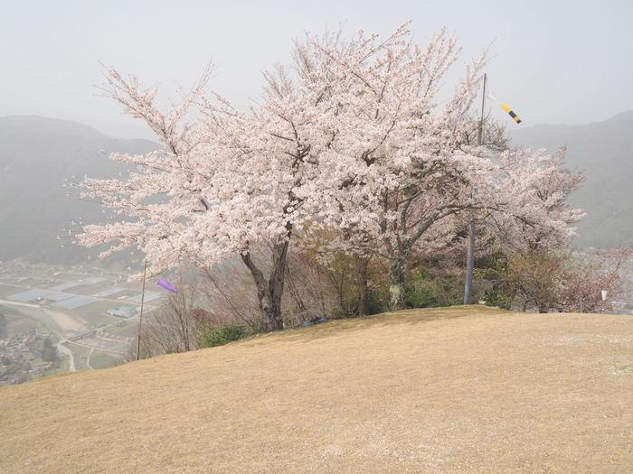 神ノ倉山登山(満開の桜)_c0116915_00585577.jpg