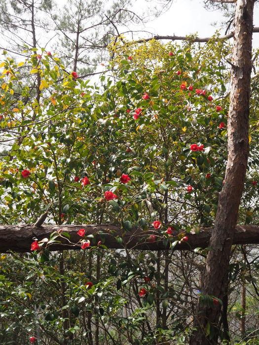 神ノ倉山登山(満開の桜)_c0116915_01041047.jpg