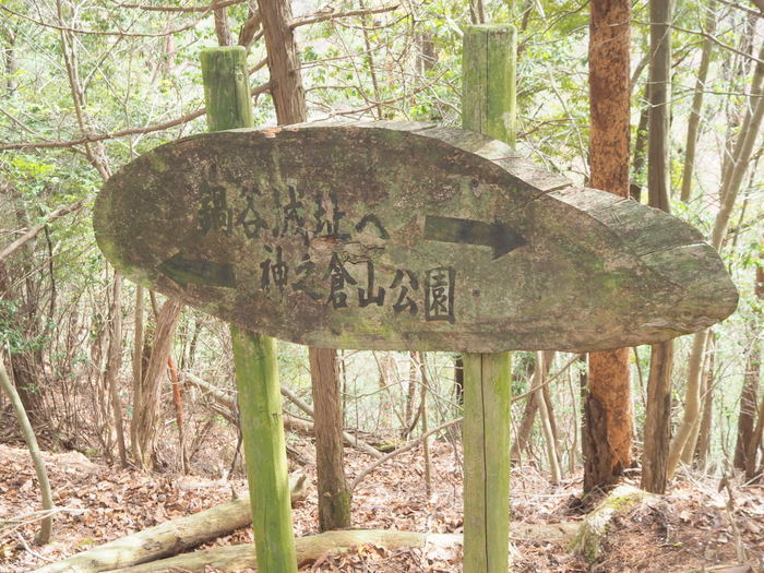 神ノ倉山登山(満開の桜)_c0116915_01050773.jpg