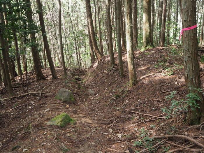 神ノ倉山登山(満開の桜)_c0116915_01084827.jpg