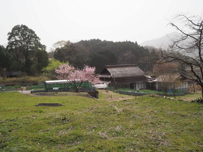 神ノ倉山登山(満開の桜)_c0116915_01095730.jpg
