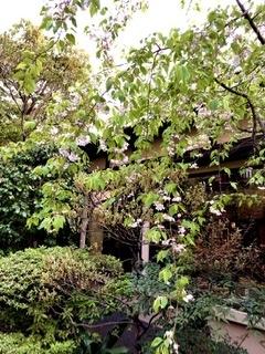 東京の温泉 板橋区 前野原温泉 さやの湯処_e0016517_21005924.jpeg